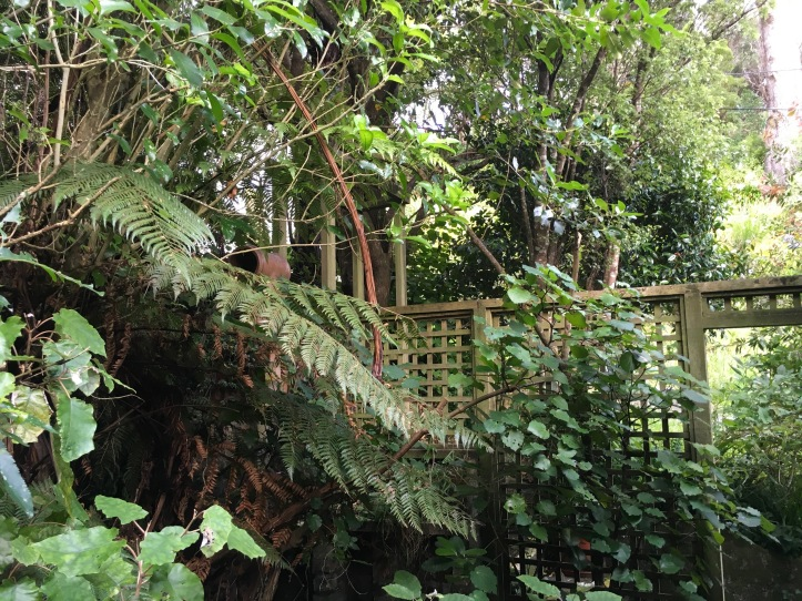 back yard trees.JPG